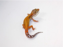 ID:B8-43, Patternless Red stripe Bell het Radar