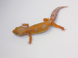 ID:BX13, Tangerine jungle Bell het Radar