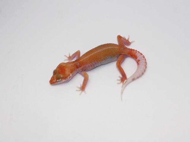 ID:EDI2, Aptor enigma het Raptor
