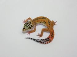 ID:R1Z34, Emerine poss het Raptor