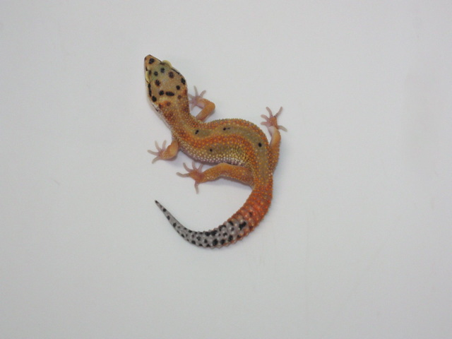 ID:RP9, Emerine poss het Raptor