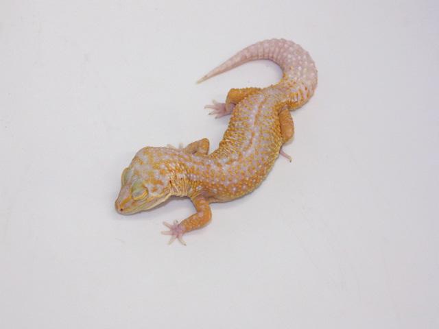 ID:T2Y33, Stone wash Tremper het Raptor