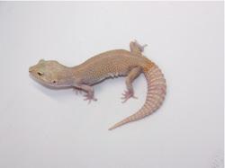 ID:TDG13, Raptor