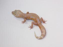 ID:TS32, Stone wash Tremper het Raptor