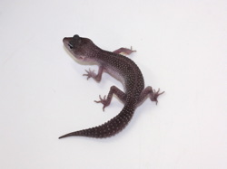 ID:TX2, Co-Dom snow blizzard het Tremper