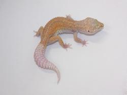 ID:TYD92, Raptor
