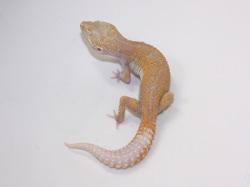 ID:TYD93, Raptor