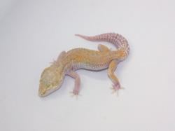 ID:TYD9, Raptor